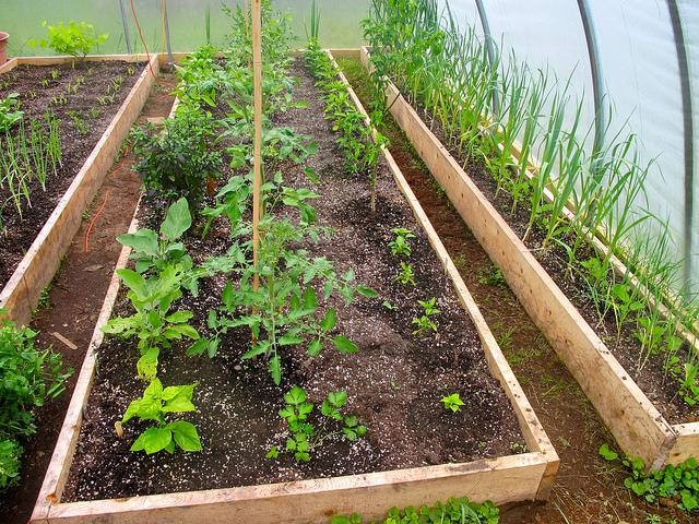 zöldségek fóliasátorban