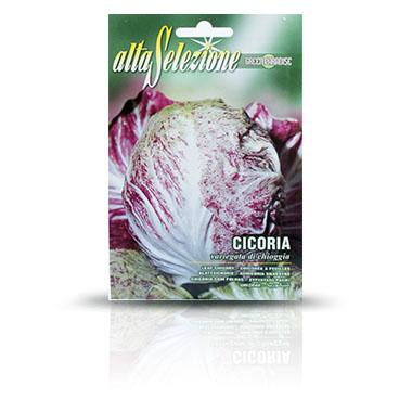 Cikória saláta vetőmag