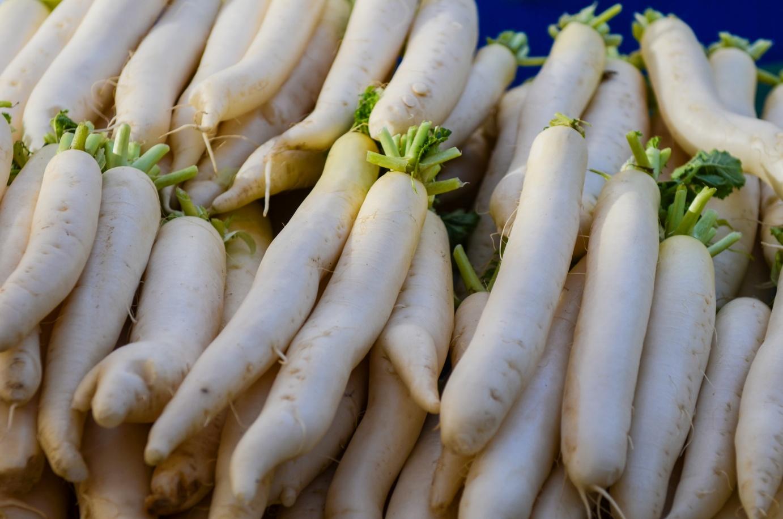 Fehér retek vetése és aratása